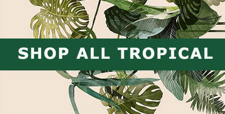 Shop All Tropical